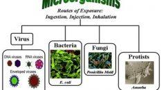 Biyolojik Etkenlere Karşı Riskler Hakkında Yönetmelik Taslağı