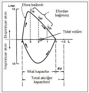 solunum fonksiyon testi açıklama